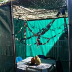 Sukkah sent in from Denver, Colorado!